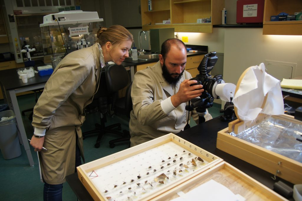 RTP participants photographing insects